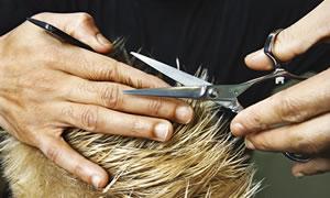 longueur cheveux homme